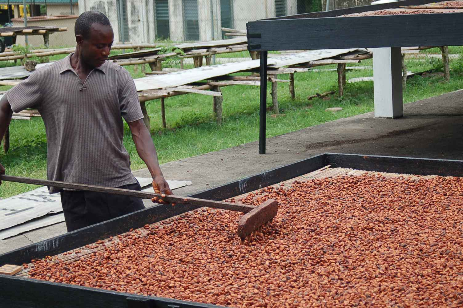 How do we see the Cocoa Farmer?